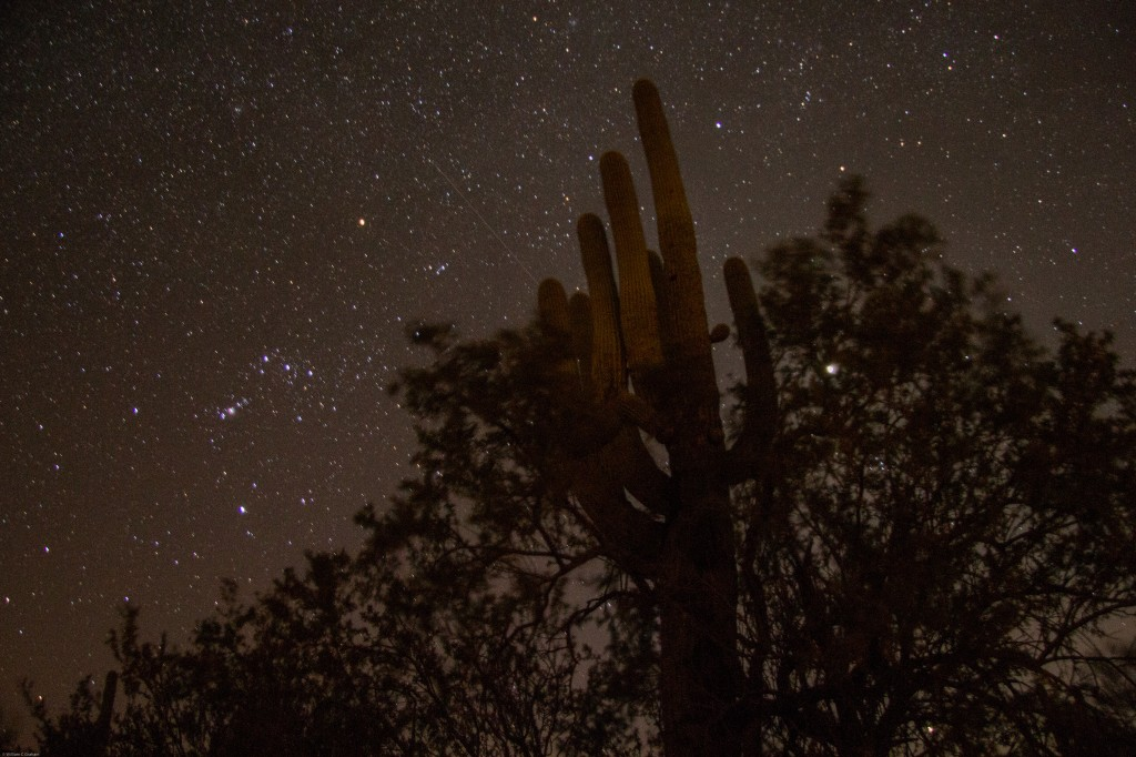 Ironwood/Sahuaro Pair At Night