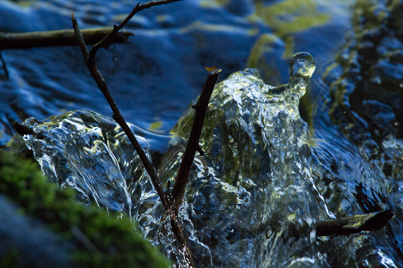 Protecting Nature's Energy Flow Is A Powerful Conservation Strategy