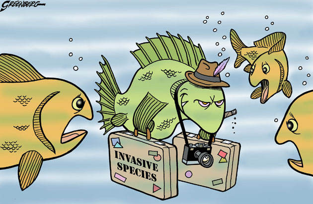 Some Thoughts On Invasive Species