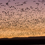 Bird flocks and forests teach us about connections in Nature