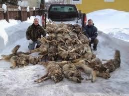 Idaho Tactical Hunters Kill As Many Wolves As They Can.