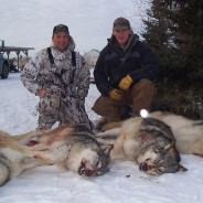 "Patterns In Nature : When people kill wild animals they now call it ""harvesting"""