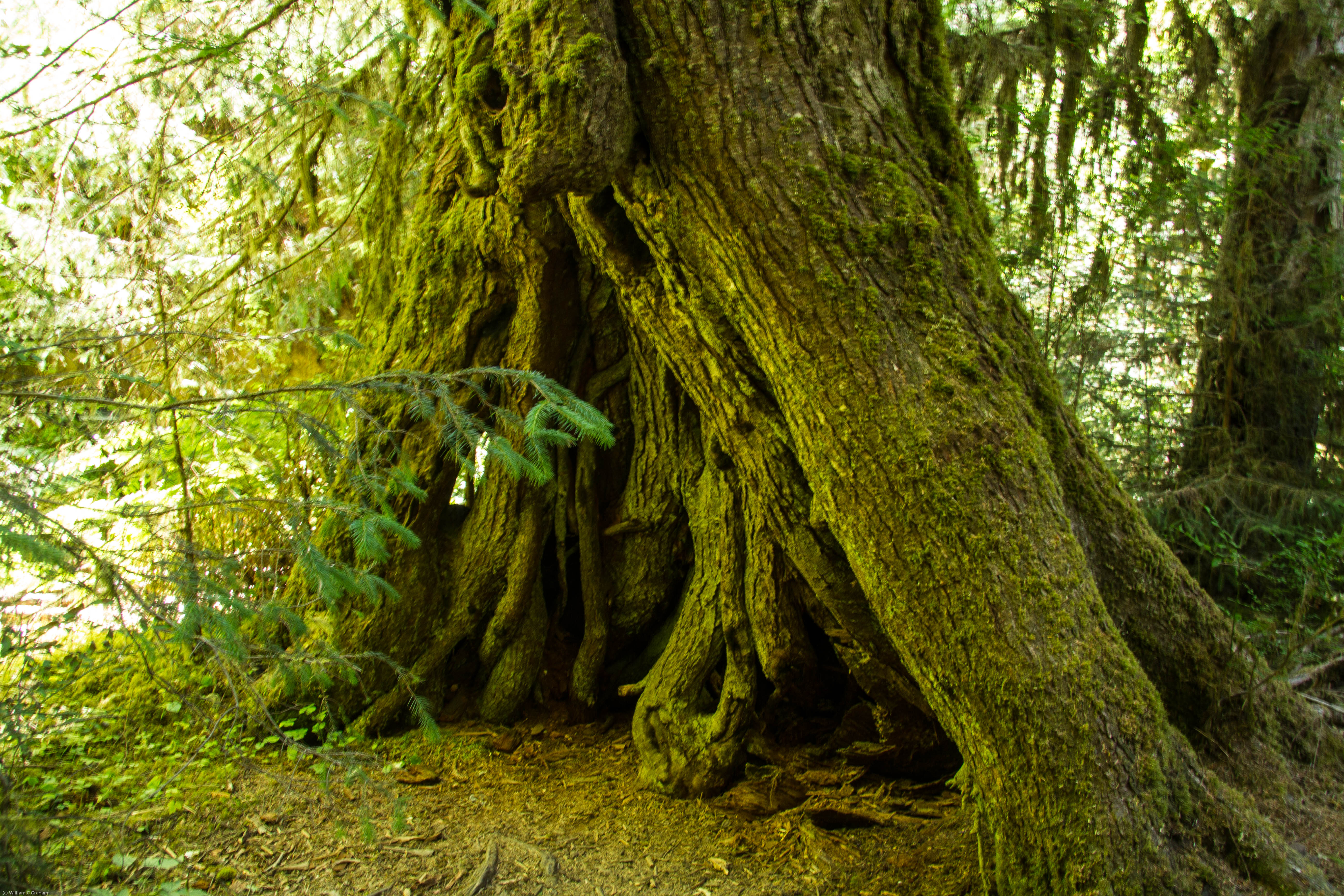 Patterns In Nature : Lessons From The Hoh Rain Forest