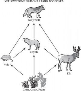 YellowstoneParkFoodWeb