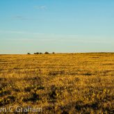 In Praise Of Prairies