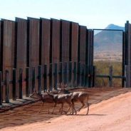 My musings – The ecological impact of Trump's border wall
