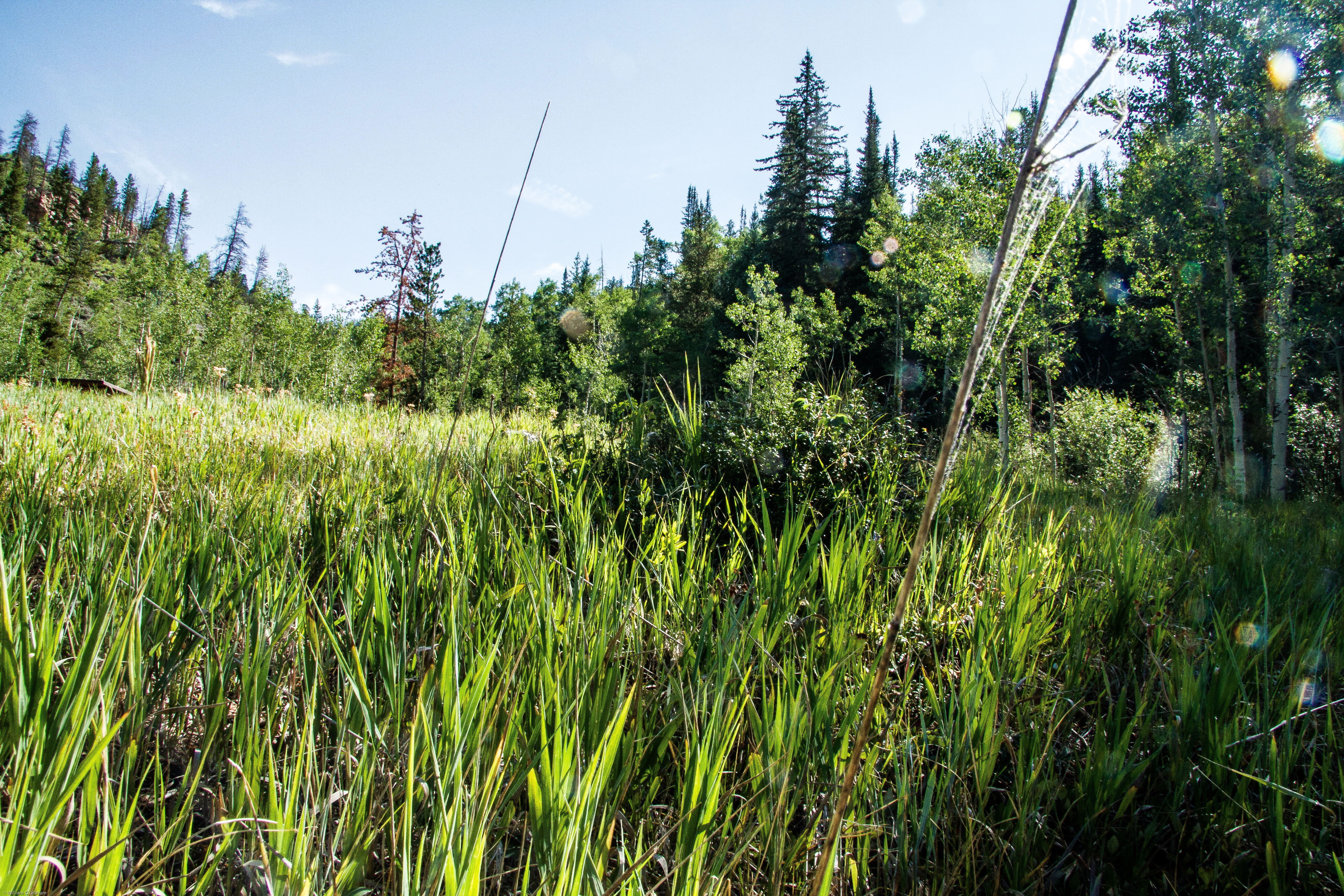 Restoring Nature's Ecosystems