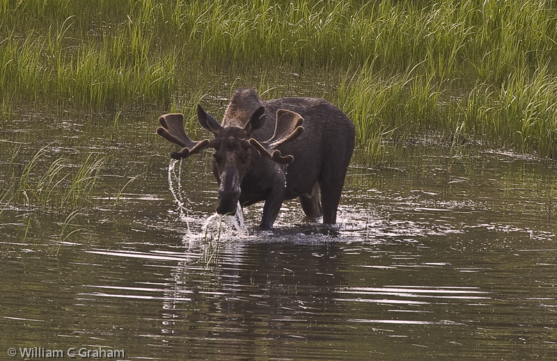 Wildlife is for all of us, not just the hunters.
