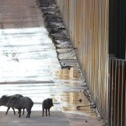 Building A Border Wall Is An Act Of Ecological Sabotage